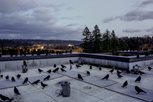 Crows on roof of UW Bothell building