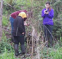 students working in the wetlands
