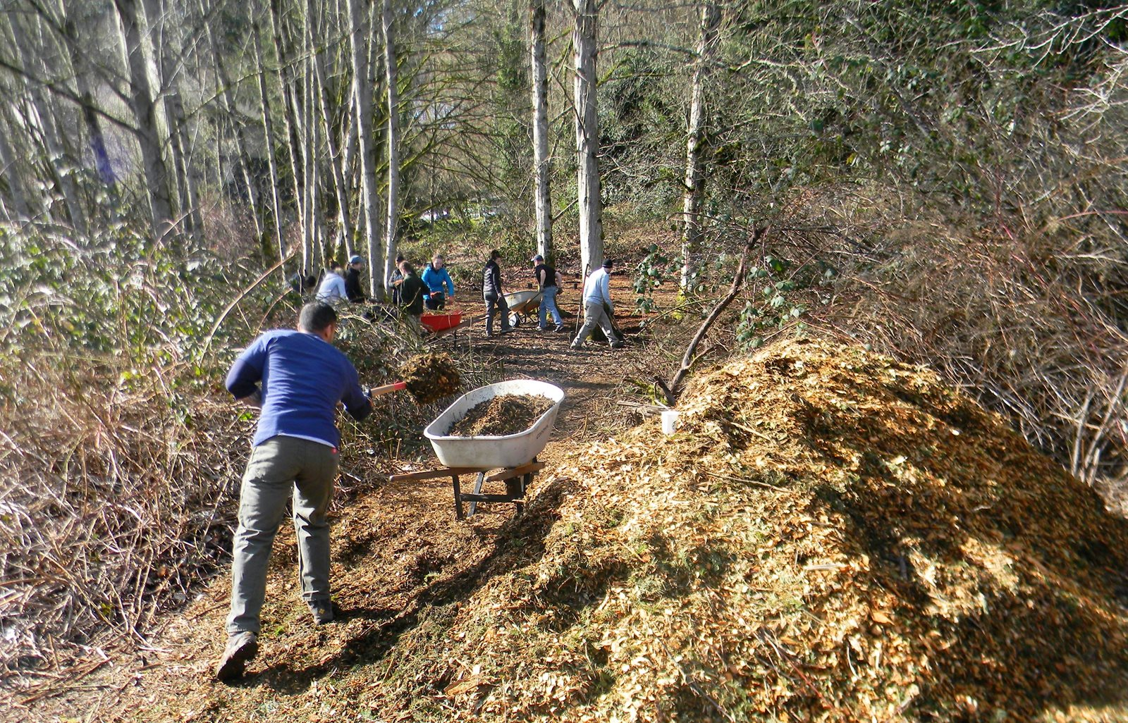 Forest cleanup work with wheelbarrow