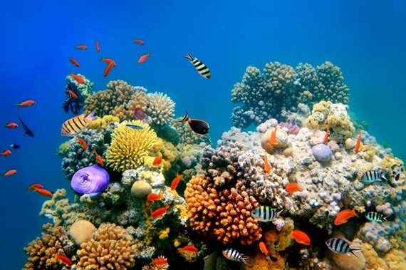 Fish swimming around coral reef.
