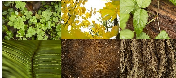 Collage of leaves and wood images.