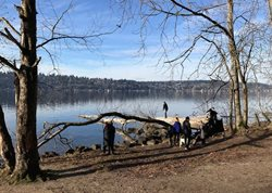 Lake Washington shoreline at St. Edward park