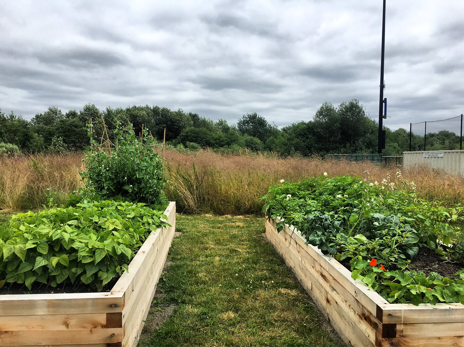 Raised beds on the Campus Farm
