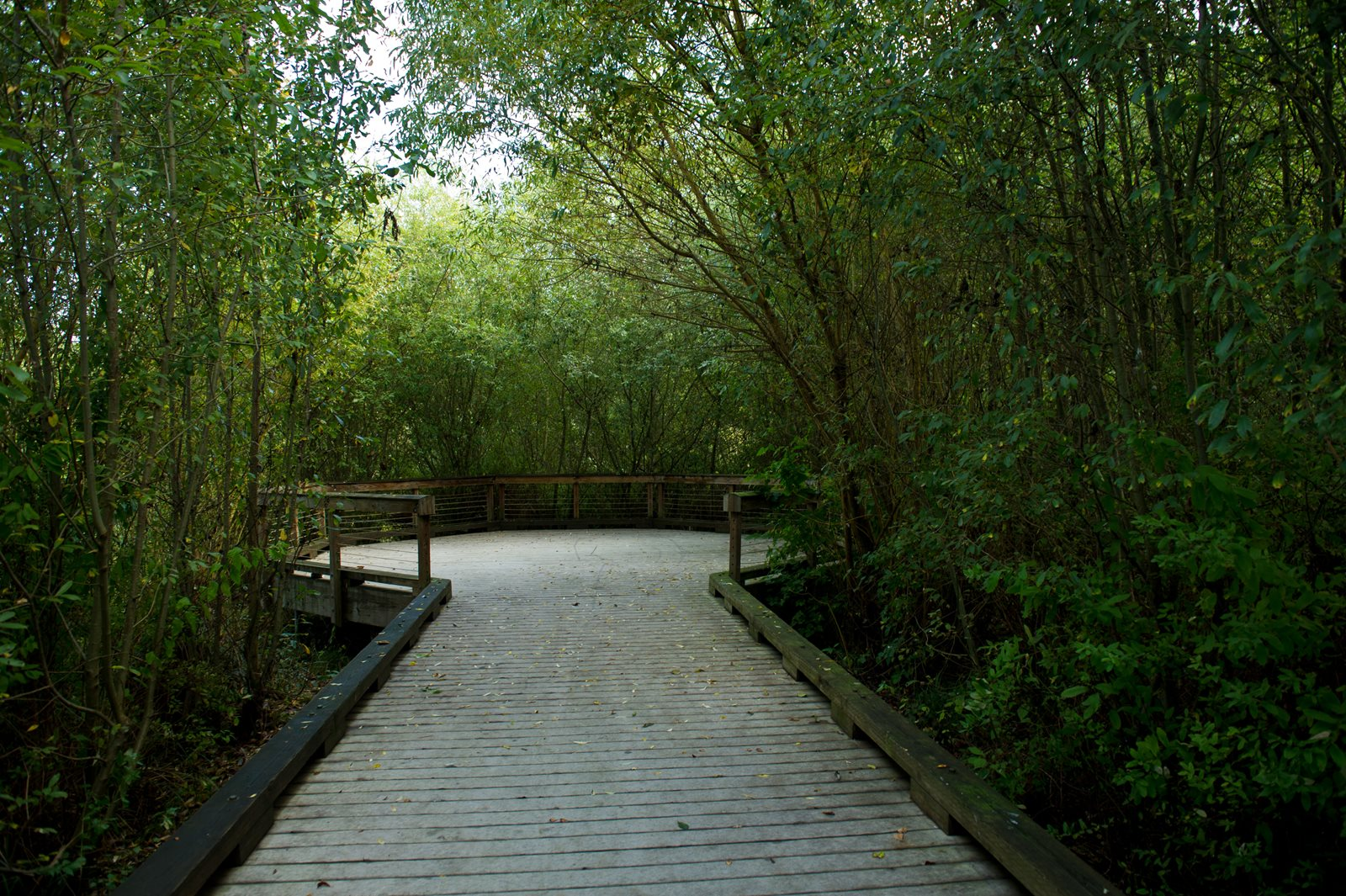 The north creek wetlands boardwalk