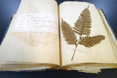 Bound book of pressed plants