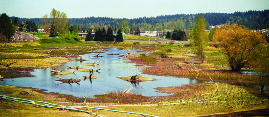 Wetlands floodplain before restoration